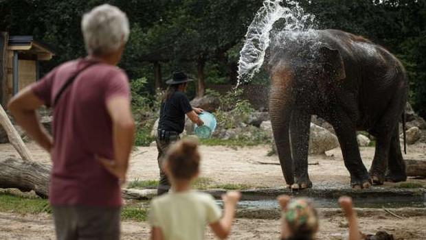Ljubljanski živalski vrt ob svetovnem dnevu slonov vabi na delavnice o ogroženih velikanih (foto: Xinhua/STA)
