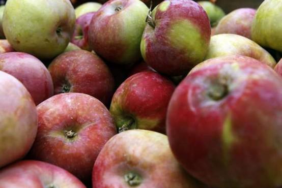 21 najpomembnejših evropskih pridelovalk jabolk bo letos pridelalo 10,7 milijona ton jabolk