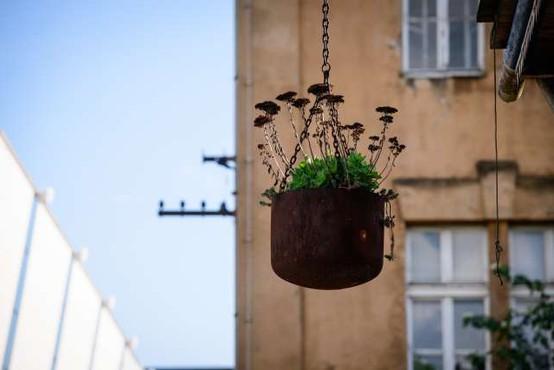Stroka opozarja pred prinašanjem rastlin iz tujine v Slovenijo