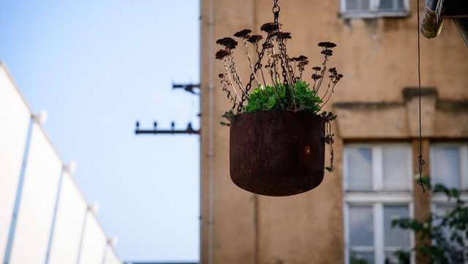 Stroka opozarja pred prinašanjem rastlin iz tujine v Slovenijo (foto: Nebojša Tejić/STA)