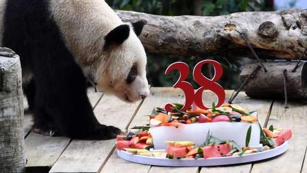Najstarejši orjaški panda na svetu praznoval 38. rojstni dan (foto: Xinhua/STA)