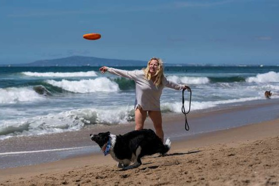 Psi se dolgoročno lažje učijo, če se po učenju igrajo z lastniki