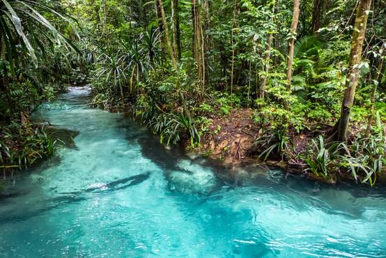 Najbolj raznovrstna flora na svetu je na Novi Gvineji