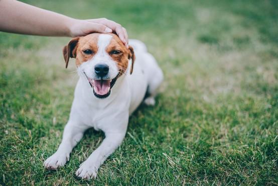 Danes obeležujemo svetovni dan psov