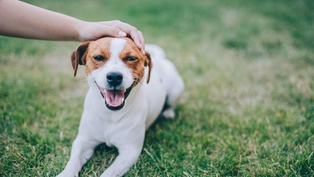 Danes obeležujemo svetovni dan psov (foto: Profimedia)