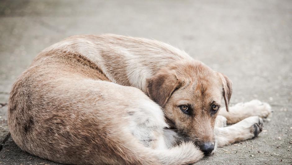 Na postaji podzemne slekel svojo majico in z njo oblekel psa, ki je premražen ležal na tleh (video) (foto: Shutterstock)
