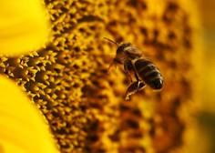 Čebelji strup uniči nekatere celice raka dojk