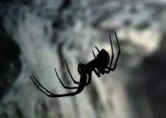 Znanstveniki poimenovali pajka po hrvaški legendi boksa Mateju Parlovu