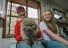 Znanost pravi, da obstaja 5 kategorij lastnikov mačk – v katero sodite vi?