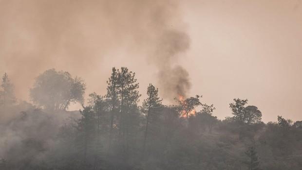 Požar v Ajdovščini, ki ga je hitro razpihovala burja, pod nadzorom (foto: profimedia)