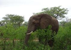 Rešena skrivnost nedavnega množičnega pogina slonov v Bocvani