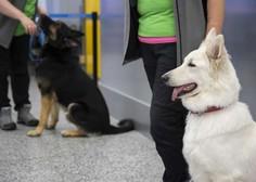 Na letališču v Helsinkih okužene s koronavirusom odkrivajo s psi