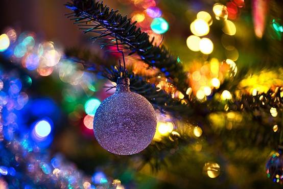 Vatikanski Trg svetega Petra bo krasilo slovensko božično drevo
