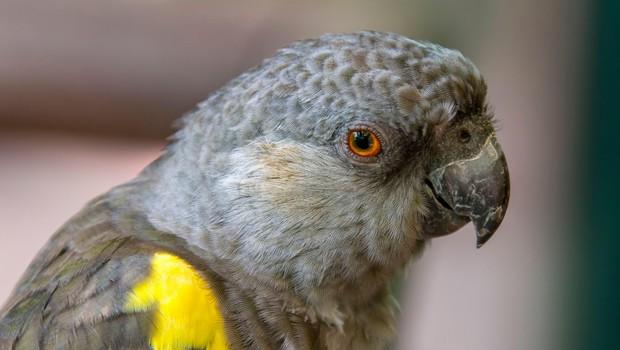 Iz angleškega živalskega vrta zaradi preklinjanja umaknili papige (foto: Profimedia)