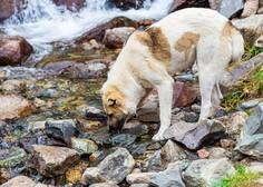 Svetovni dan živali namenjen spoštljivem odnosu do vseh živali