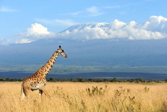 S požarom na 2700 metrih višine na južnem delu Kilimandžara se bori okoli 600 gasilcev