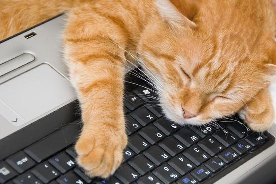 Kaj vam hoče povedati vaša mačka, ko vam sredi dela sede na laptop?