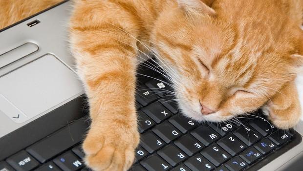 Kaj vam hoče povedati vaša mačka, ko vam sredi dela sede na laptop? (foto: profimedia)