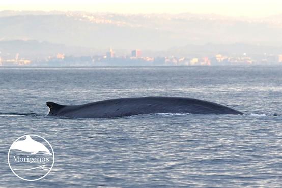 Brazdasta kita sta obiskala Tržaški zaliv