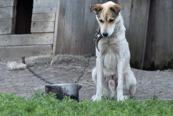 Grški parlament sprejel zakon, po katerem lahko zaradi mučenja živali pozameznika doleti 10-letna zaporna kazen