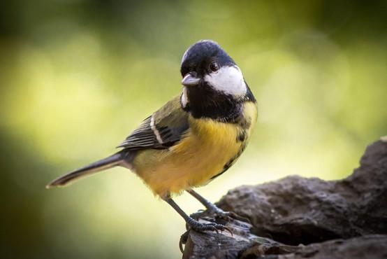 Pametna ptičja hišica, ki je plod slovenske pameti, ima že blizu 700 tisoč evrov za razvoj