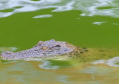 Nenavadno odkritje: na otoku Vis so našli krokodila