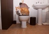 Zakaj vam vaša mačka vsepovsod sledi (tudi, ko greste na WC)?