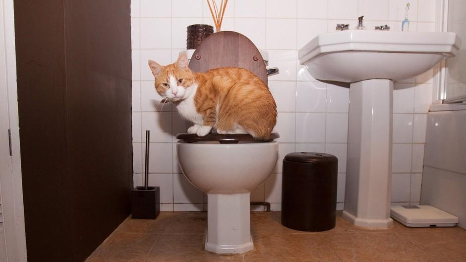 Zakaj vam vaša mačka vsepovsod sledi (tudi, ko greste na WC)? (foto: profimedia)