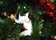 Sezonska spletna obsesija je spet tu - mačke proti božičnim drevescem