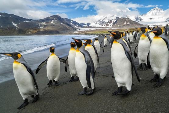 Pingvini v londonskem akvariju gledajo božične filme