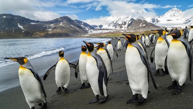 Pingvini v londonskem akvariju gledajo božične filme (foto: Profimedia)