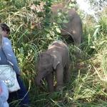 Pismo Nine iz Tajske, ki je pustila življenje v Sloveniji in šla reševat slone (foto: osebni arhiv)