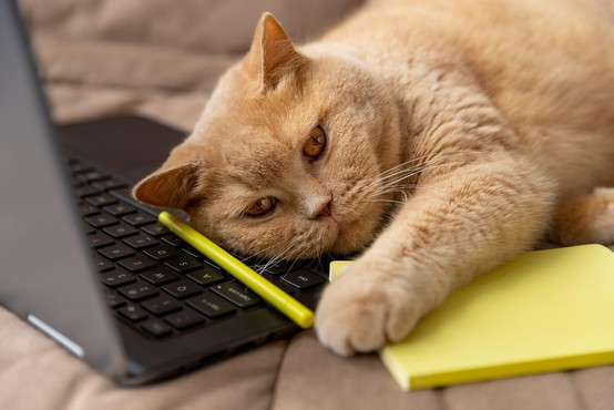 9 fotografij, ki dokazujejo, da nikoli ne bomo zares razumeli mačk