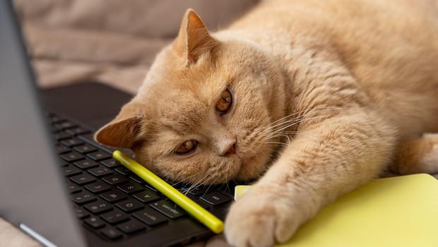 9 fotografij, ki dokazujejo, da nikoli ne bomo zares razumeli mačk (foto: Profimedia)