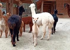 Ljubljanski živalski vrt po dveh mesecih znova odprt, prvi dan več kot 500 obiskovalcev