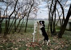 Akcija Bolj zelena Slovenija: drevesa, posajena s srcem