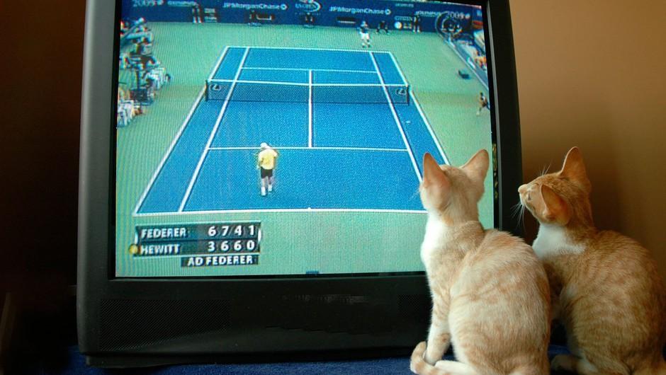 Teniški igralci v karanteni zahtevali tudi mucke in kužke (foto: profimedia)