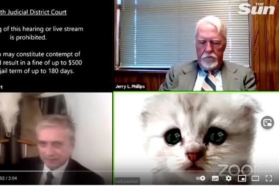 """""""Nisem maček,"""" se je obupano skušal rešiti iz zadrege odvetnik z nenavadno težavo na Zoomu!"""