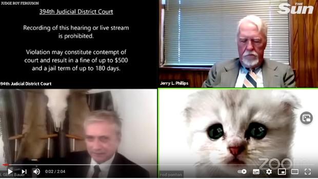 """""""Nisem maček,"""" se je obupano skušal rešiti iz zadrege odvetnik z nenavadno težavo na Zoomu! (foto: youtube)"""