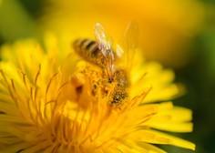 Začela se je sezona alergenega cvetnega prahu
