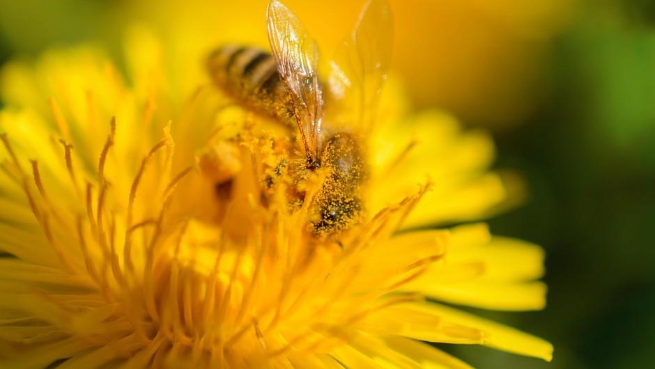 Začela se je sezona alergenega cvetnega prahu (foto: Profimedia)