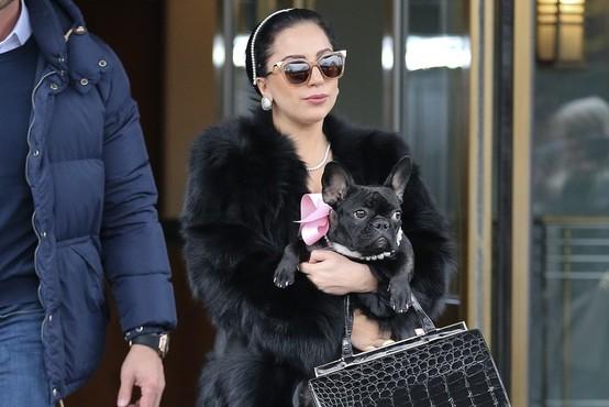 Neznanca v Los Angelesu ubila sprehajalca psov Lady Gaga in ugrabila njena dva buldoga