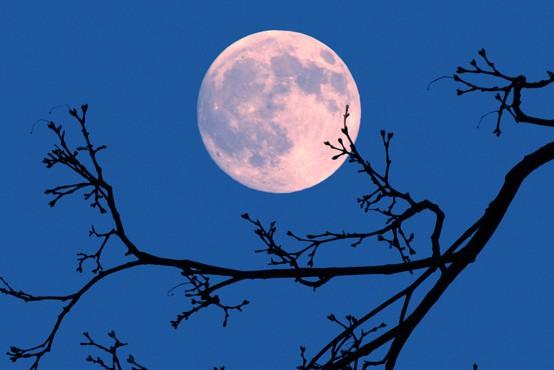 Japonski milijarder vabi osem ljudi z vsega sveta, da se mu pridružijo na poletu okoli Lune