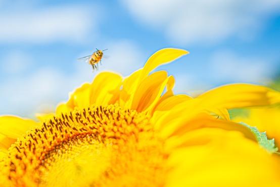 Veliko cvetnega prahu v zraku povečuje možnost okužbe z novim koronavirusom