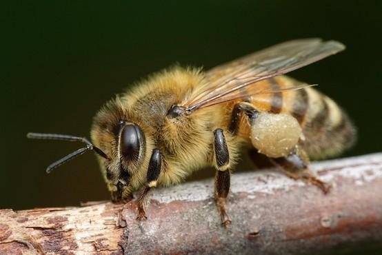 Odprli čebelarski paviljon Medena zgodba