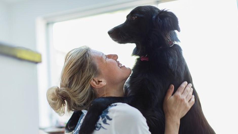Bodite odgovoren lastnik hišnega ljubljenčka - zaščitite kosmatince pred zajedavci! (foto: Profimedia)