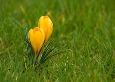 Prvi pomladni dan še hladen, prihodnji teden postopna otoplitev