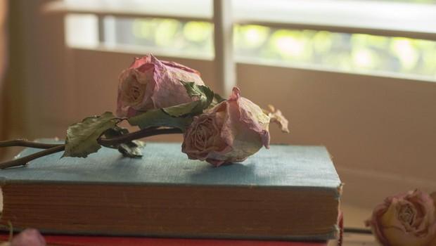 Cvetka Lipuš: Pri pisanju prevzamejo besede krmilo in te vodijo v neznano (foto: profimedia)