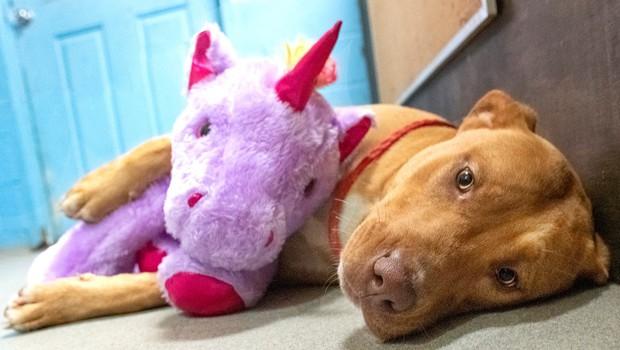 Potepuški pes, ki si je na vsak način prizadeval ukrasti vijoličnega samoroga, je dobil dom! (foto: Duplin County Animal Services Facebook)