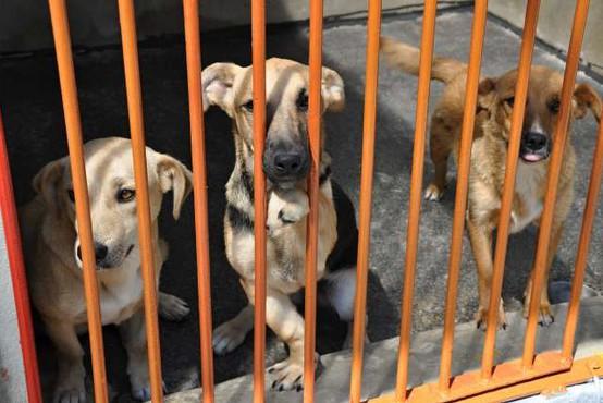 Projekt Posvojite prijatelja pomaga zapuščenim živalim